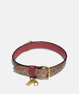 MEDIUM/LARGE PET COLLAR IN SIGNATURE CANVAS