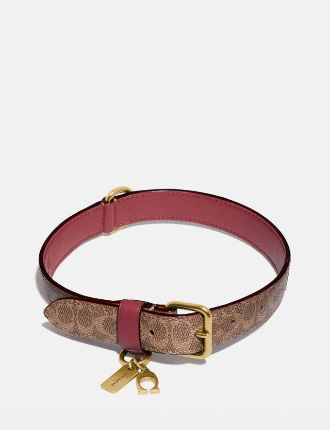 Coach Medium/Large Pet Collar in Signature Canvas Saddle/Khaki Women Accessories Pet Accessories